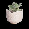 Immagine di vaso ananas a metà in ceramica colore bianco